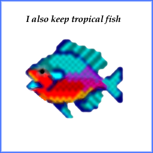 Tropical Fish Photo Album